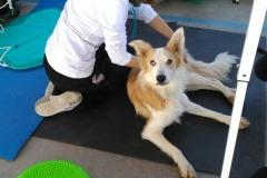 Fisioterapia deportiva Vet&Run