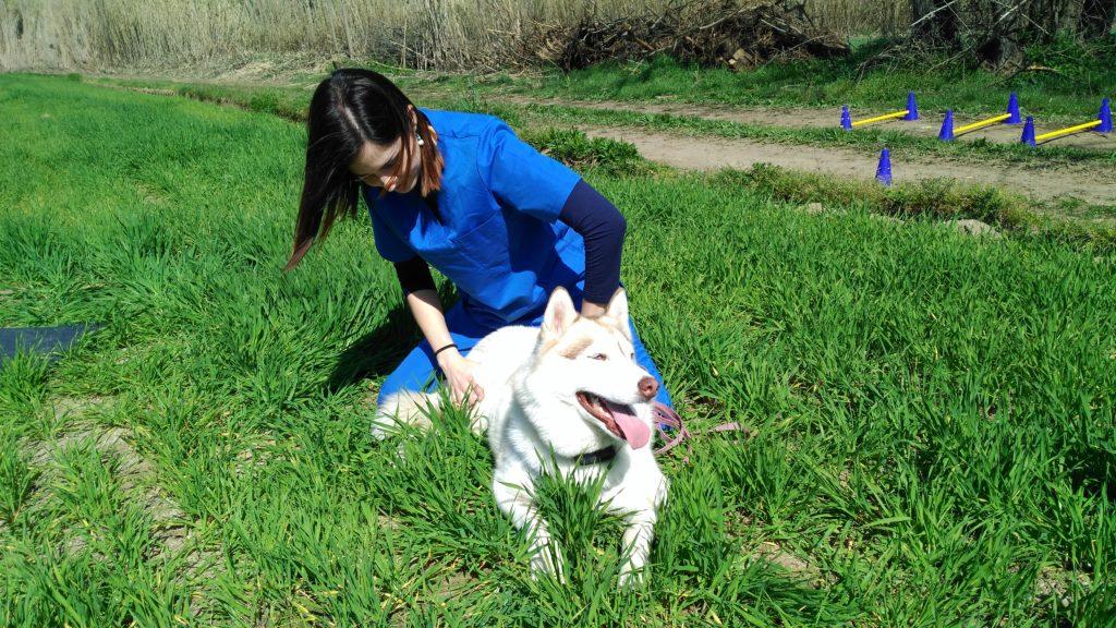 Masaje terapéutico Vet&Run Rehabilitación y Fisioterapia Veterinaria