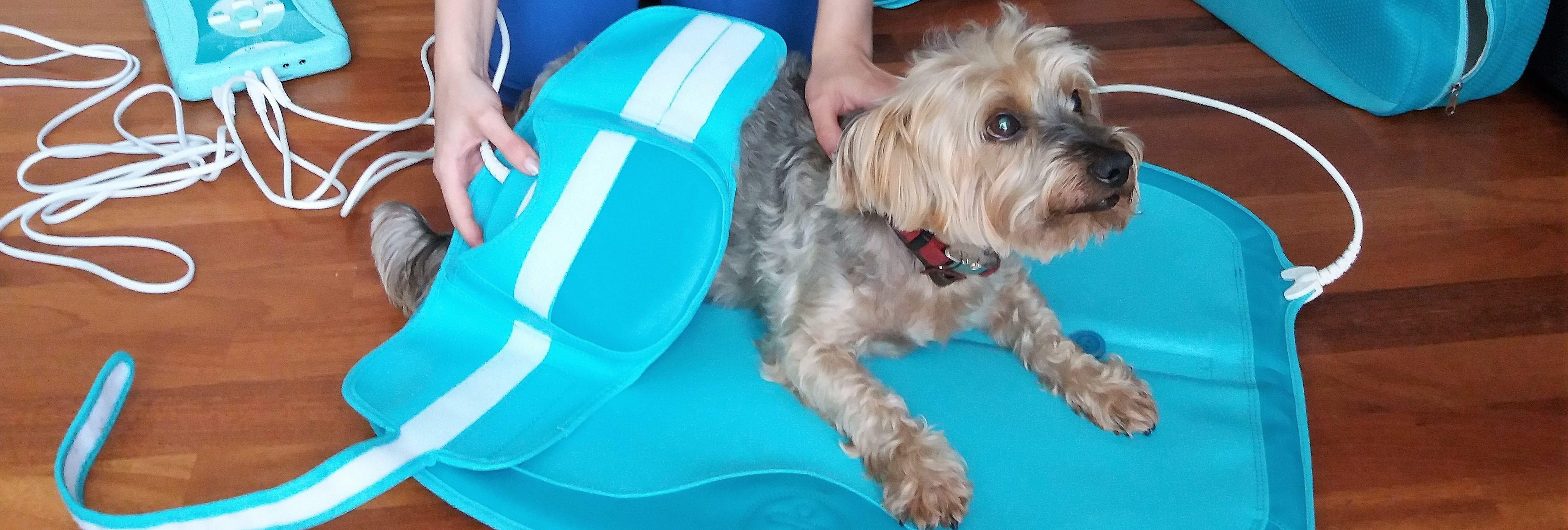 Magnetoterapia rehabilitación veterinaria